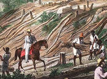 1760 – Lavouras de café