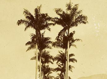 1808 – Real Horto Botânico